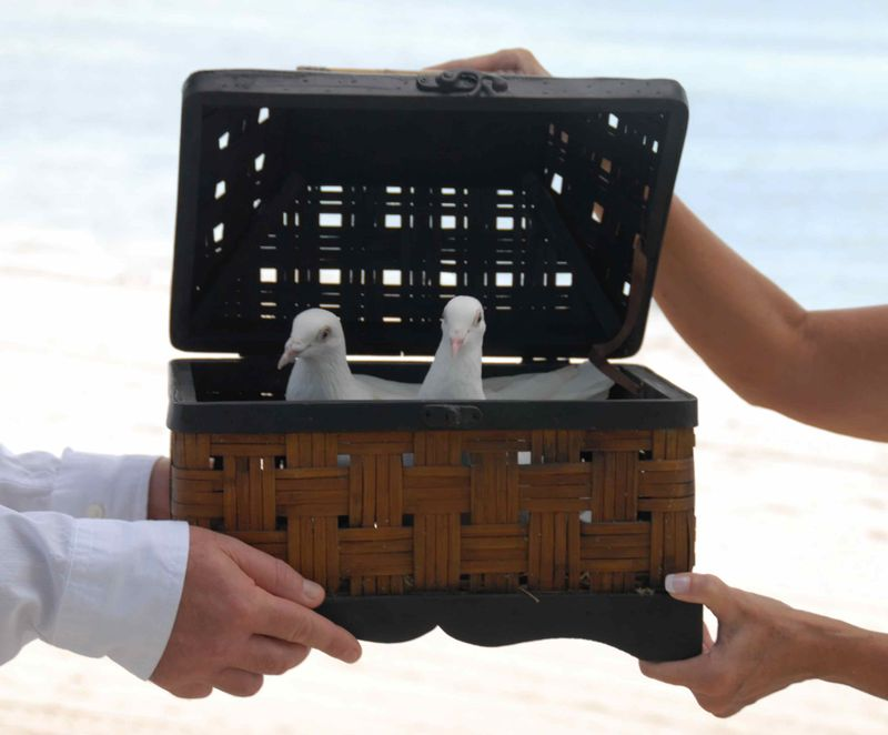 Key West Dove Release 2